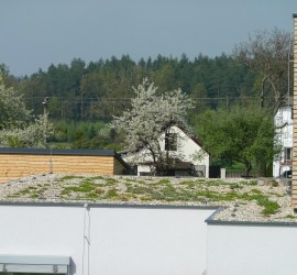 střešní zahrady